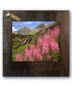 R94LSP-Fireweed, Yakee Boy Basin, San Juan Mountains, Colorado